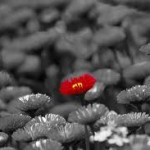 Identifying Your Uniqueness and Standing Out As A Writer